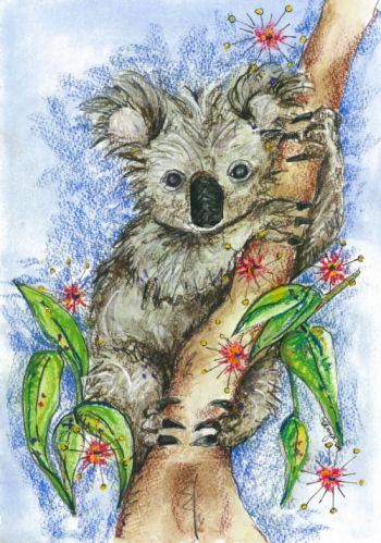About australia shop 5 pack greeting cards koala m4hsunfo
